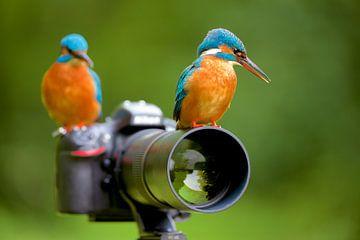 IJsvogel - Jij stelt scherp, ik druk op het knopje! van