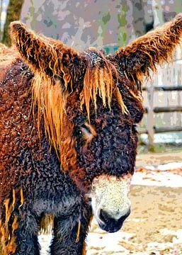 Poitou donkey van Leopold Brix
