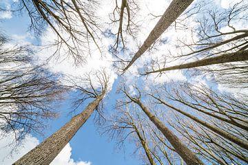 boomtoppen met wolken van Marcel Derweduwen