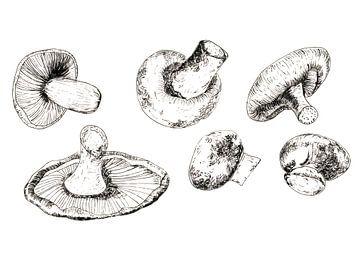 Tuschezeichnung von Pilzen von Ivonne Wierink