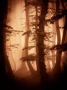 Herfts in het bos (bruintinten)