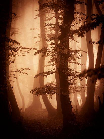 Herfts in het bos (bruintinten) van Mark Scheper