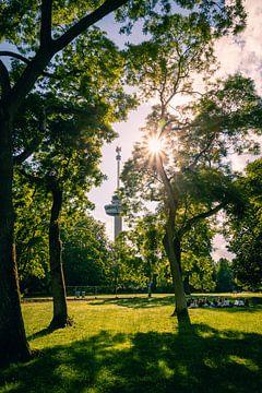 Euromast durch die Bäume des Parks von Lolke Bergsma