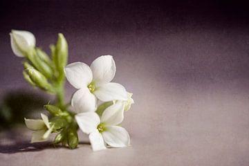 tedere bloemen van Kristof Ven