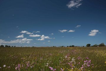 Bloemenpracht en wolken von By Foto Joukje