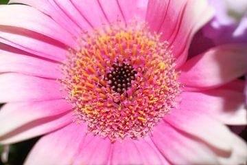 Blume von Lathére Heuvel