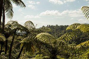 Palmtree Forest van Anne Vermeer