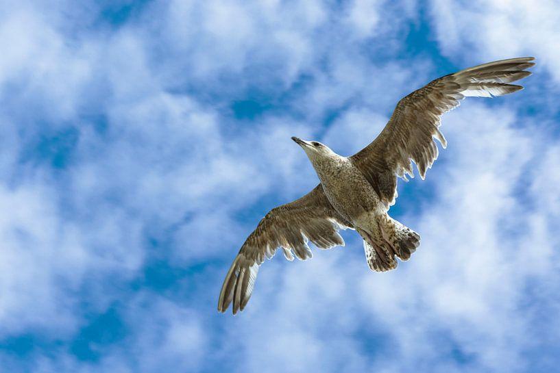 meeuw in de lucht von John van Weenen