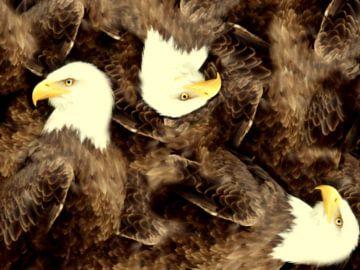 Dreimal Adler von Greta Lipman