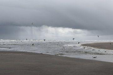 Regen auf dem Weg von Noor van Duijvenboden