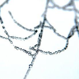Eis auf der Ruine eines Spinnennetzes von Peter Baak