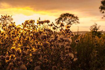 Avondgloed over veld van Tot Kijk Fotografie: natuur aan de muur