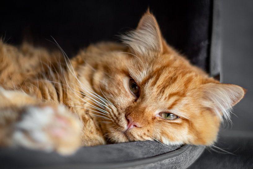 Luie oranje kat van Heleen Pennings