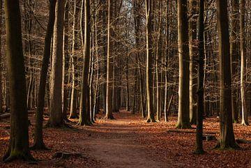Rust van het bos...