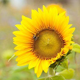 Zonnebloem met hommel van Marijke van Eijkeren