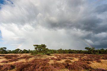 Regenwolken und Regenbogen über der Veluwe von Wim Stolwerk