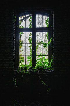 Die Natur übernimmt von Deborah Zannini