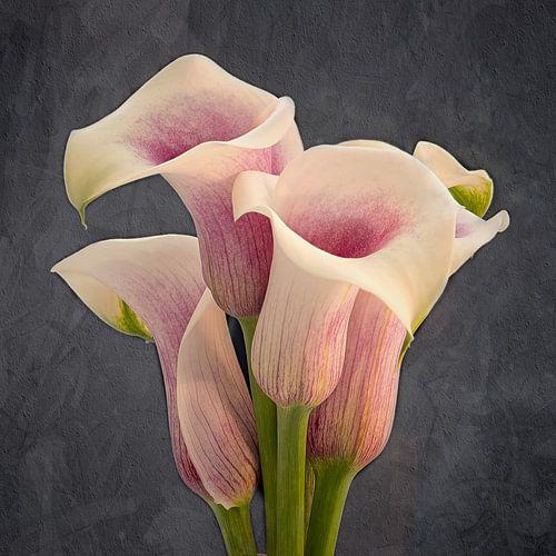 calla bloem van
