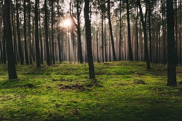 Zonneschijn in het mosbos van Skyze Photography by André Stein