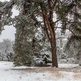 Winter Pine Tree van William Mevissen