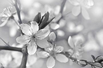 Blooming Branches sur Violetta Honkisz