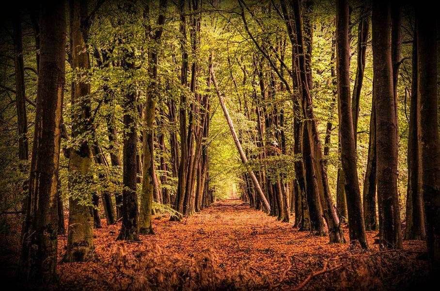 Herfst in al zijn facetten van Evelien Scholten