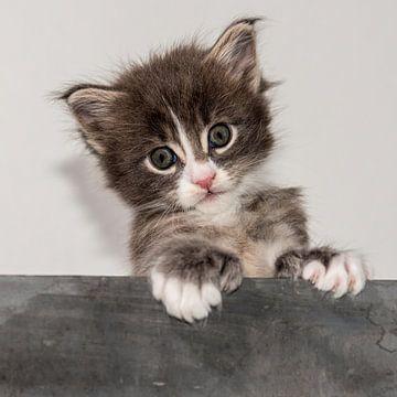 Kitten serie V van Rob Smit