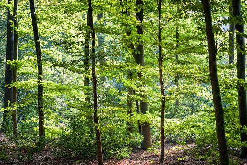 Zonlicht dat door groen bladerdak van de takken valt