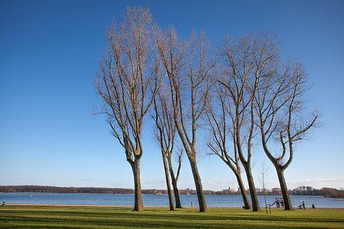Bomen aan de Rotterdamse Kralingse Plas van