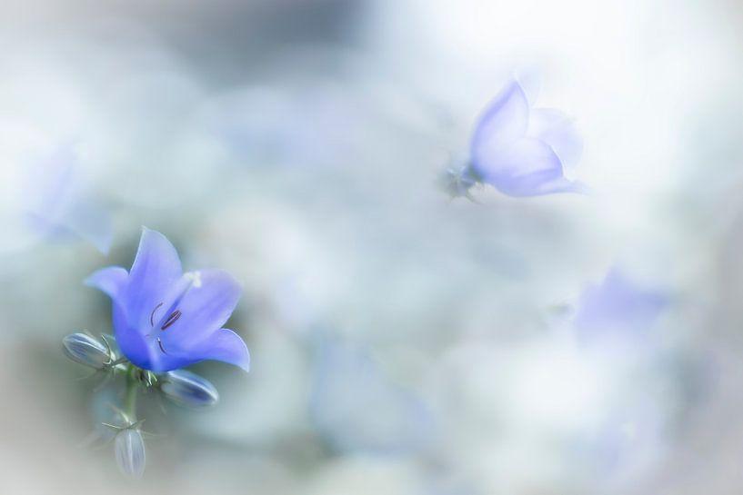 Klokjesbloem in zacht blauw van Greetje van Son