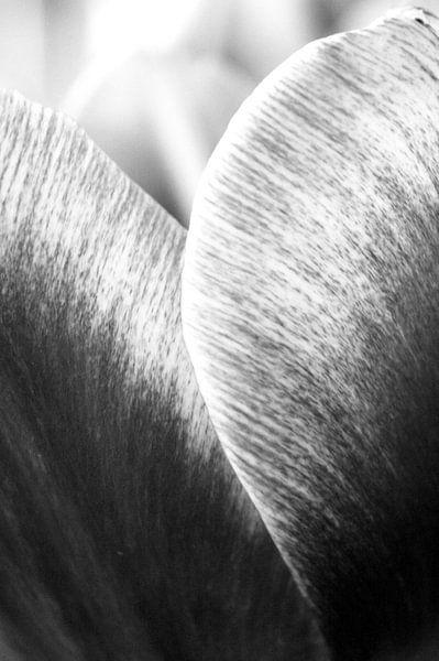 Tulp in zwart-wit van Jessica van den Heuvel
