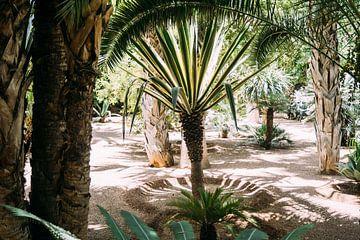 Palmbomen van Patrycja Polechonska