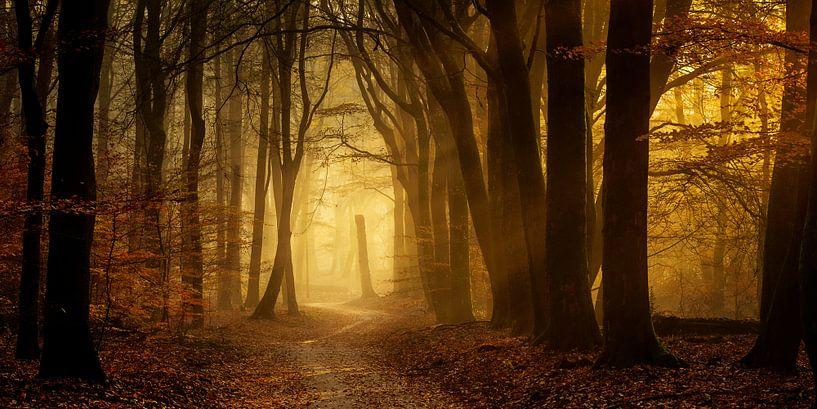Op een nevelige herfst ochtend van Rigo Meens