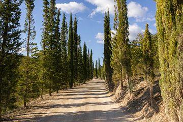 Toscaanse Cipressen Laan van MDRN HOME