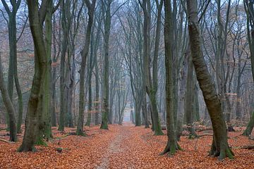 Wenn die Blätter gefallen sind von Cor de Hamer