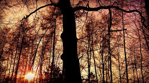 Waldmagie von Julia Delgado