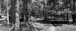 Leuvenumse bos panorama in zwart-wit van Gerard de Zwaan