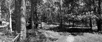 Leuvenum Wald-Panorama in schwarz-weiß von Gerard de Zwaan