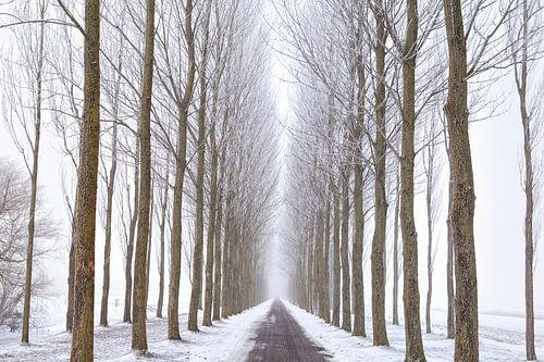 Snowy way van Olha Rohulya