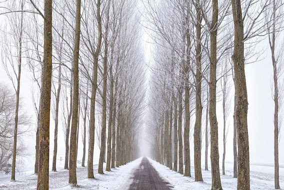 Snowy way