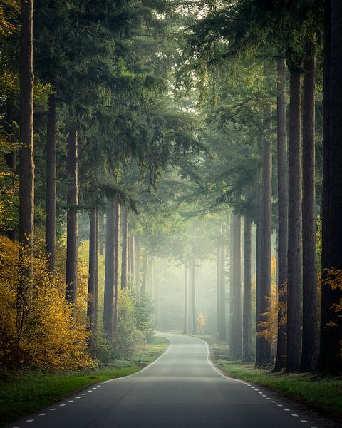 Weg naar het Speulderbos van Edwin Mooijaart
