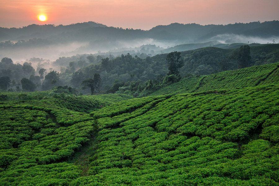 Theeplantage Nirmala Tea Estate - West-Java, Indonesië van Martijn Smeets