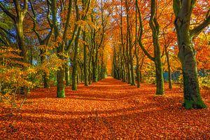Het pad van de herfst van Robert Stienstra