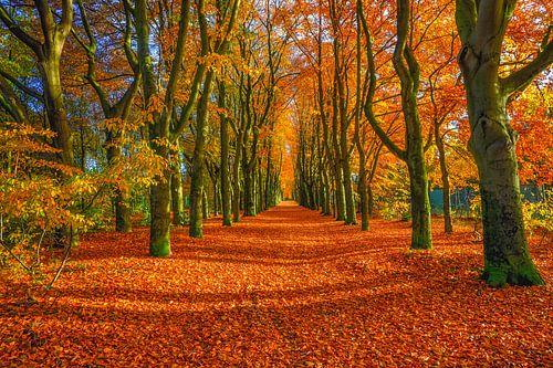 Het pad van de herfst