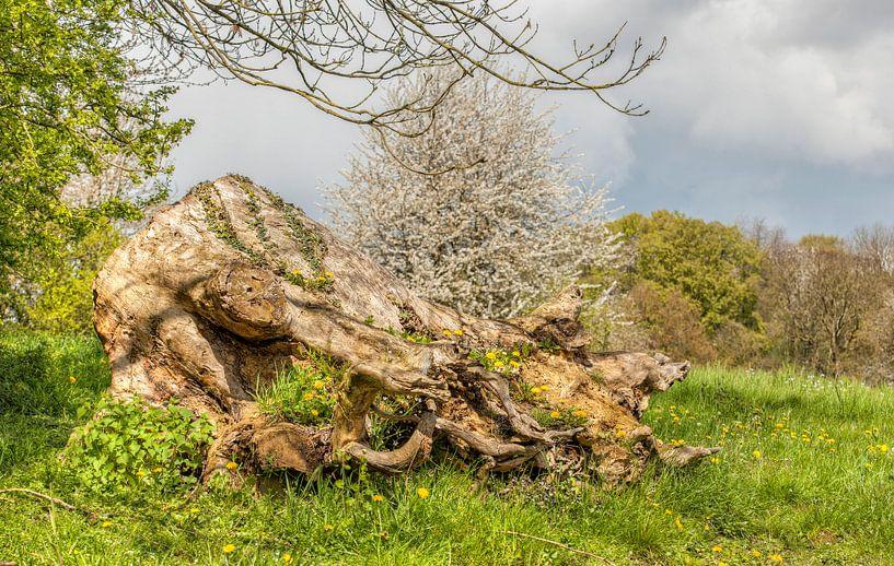 Begroeide boomstronk tijdens de Lente van John Kreukniet