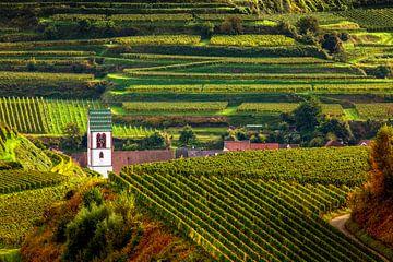 Dorp in de wijngaard van Jürgen Wiesler