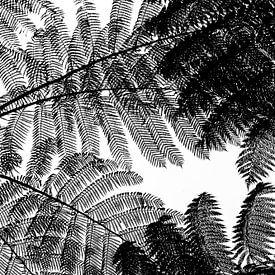 Zwart wit boomvaren abstract van Ellis Peeters