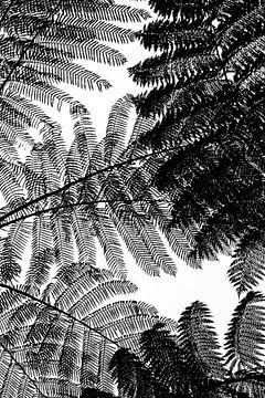 Zwart wit boomvaren abstract
