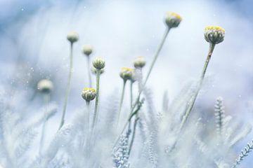bloemknopjes van Kristof Ven