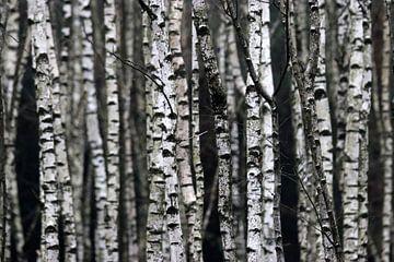 Door de bomen het bos niet meer zien van Herman van Alfen